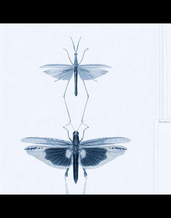 Entomology blue 02 mind the gap behang den haag frederikpremier interieurwinkel