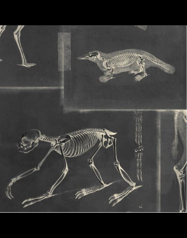 Zooarchaeology anthracite 02 mind the gap behang den haag frederikpremier interieurwinkel